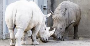 Ζώα μεαλμπινισμό [Photos]