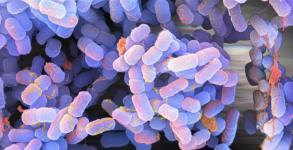 Κίνδυνοι και ασθένειες που προκαλούνται από τρόφιμα